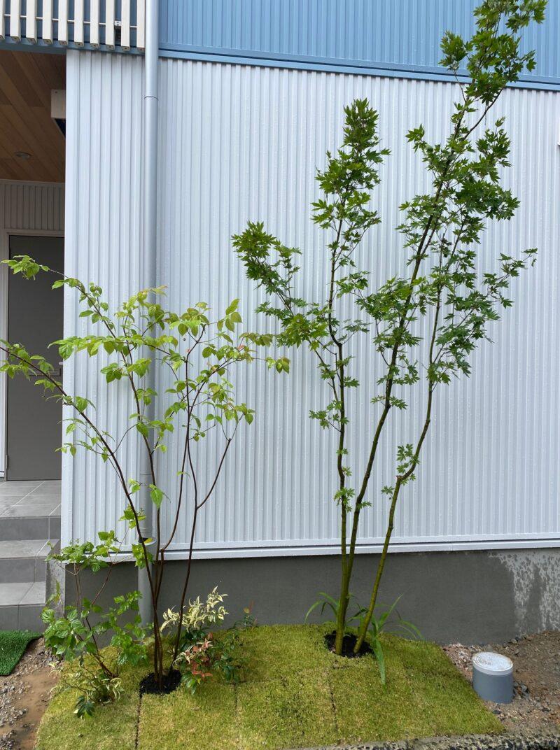 雑木ガーデン